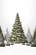 albero-natale-neve-montagna
