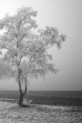 galaverna-albero-ghiaccio