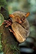 lemure-sfondo
