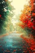 wallpaper_autunno