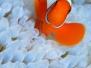 Sfondi iPhone acquario marino