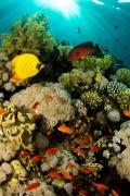 mare-pesci-coralli